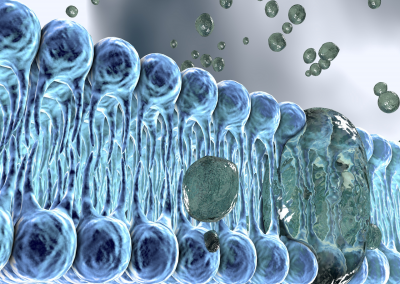 Dynamic Interactions at Cell Membrane Interfaces